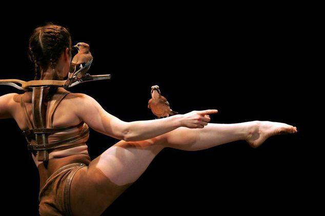 """""""La confidence des oiseaux"""" Luc Petton"""